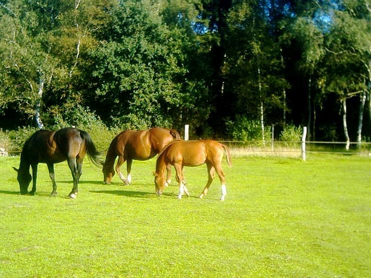 Bild 2: Resthof, Wohnen mit Pferden, Landhaus Angebote!