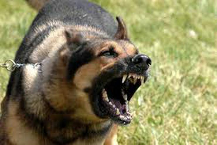 Hundeschule Amperland - Ist Ihr Hund der Chef ?
