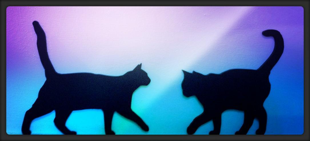 Minz und Maunz - Catsitting & Tierkommunikation
