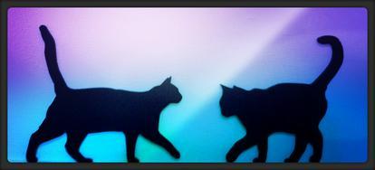 Minz Maunz Mobile Katzenbetreuung - Tiersitter & -pensionen - Bild 1