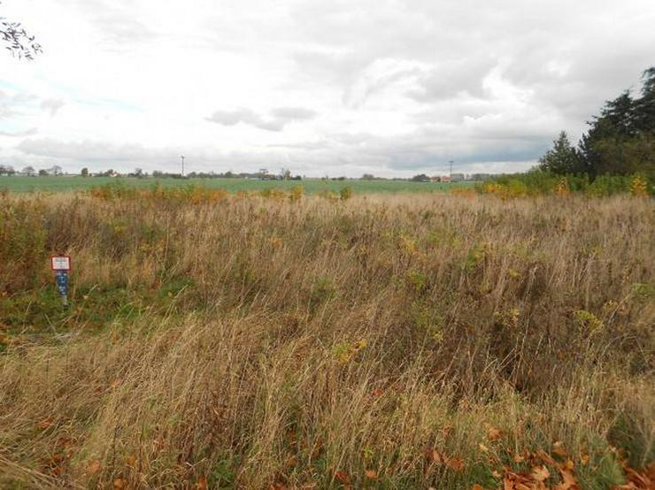 Bild 2: Attraktives Grundstück Nahe Greifswald