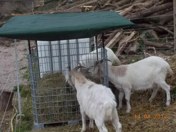 Heuraufe,Weide,Pferde,Ziegen,Schafe - Pferde (Großpferde) - Bild 1