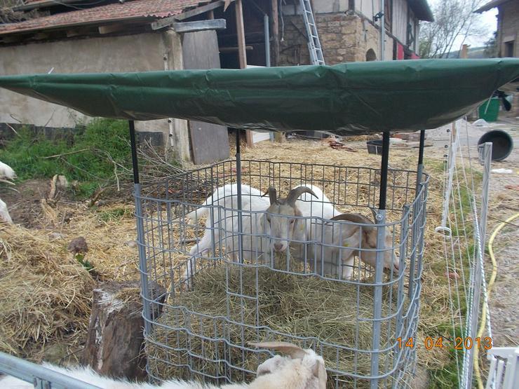 Bild 4: Heuraufe,Weide,Pferde,Ziegen,Schafe