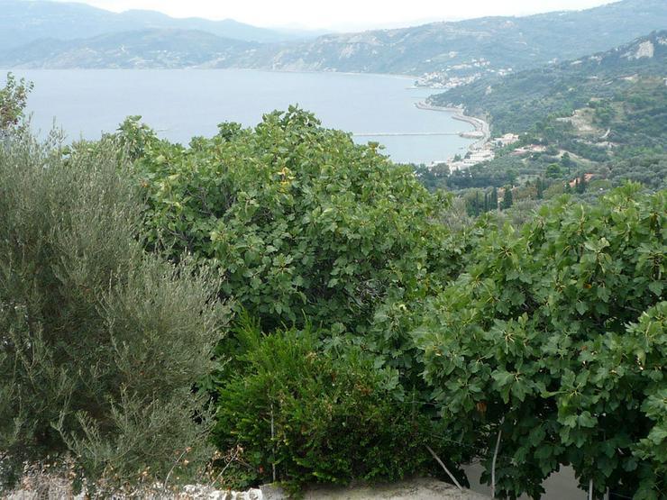 Bild 2: A plot with sea view on the isl. Evia