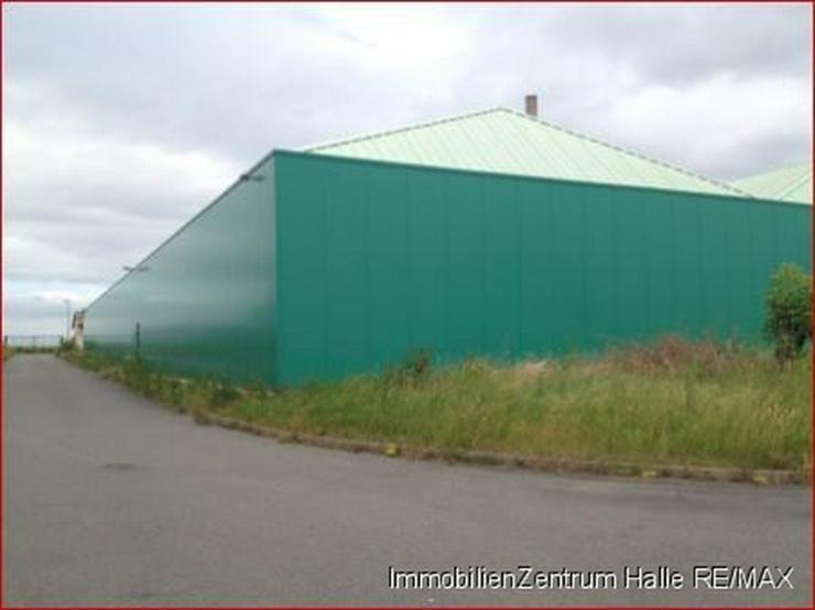 Große Gewerbe-/Lagerhalle an der A14 im Norden v. Halle - Gewerbeimmobilie mieten - Bild 1