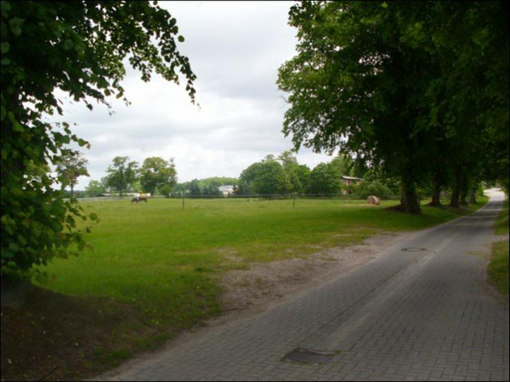 Preisgünstiges Bauland 10 km vor der Insel Usedom in 3 Parzellen teilbar - Grundstück kaufen - Bild 1