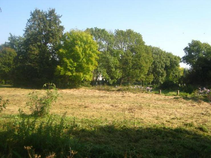 Grundstück in Wilczkow bei Breslau zu verkaufen - Grundstück kaufen - Bild 1