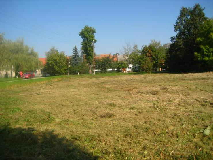 Bild 3: Grundstück in Wilczkow bei Breslau zu verkaufen