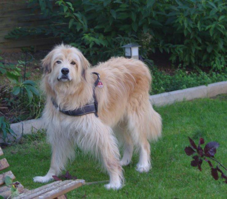 Daddy sucht ein neues zu Hause - Mischlingshunde - Bild 1