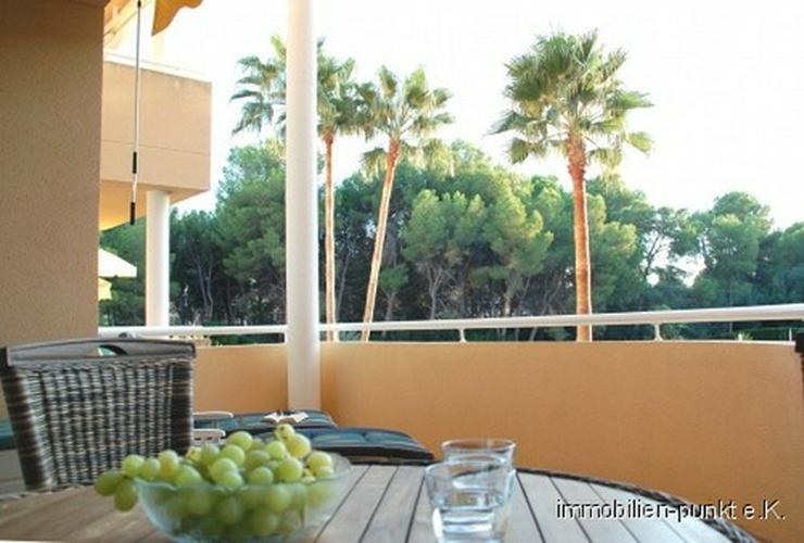 Bild 4: Zu Hause auf Mallorca!