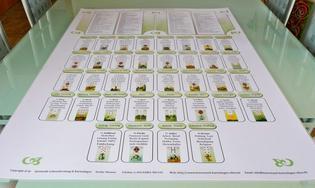Lenormand deuten lernen Legesystem H�usertafel - Management & Kommunikation - Bild 1