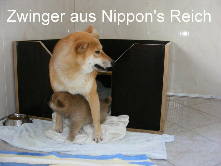 Bild 6: 18 Jahre erfolgreiche Shiba Inu Zucht