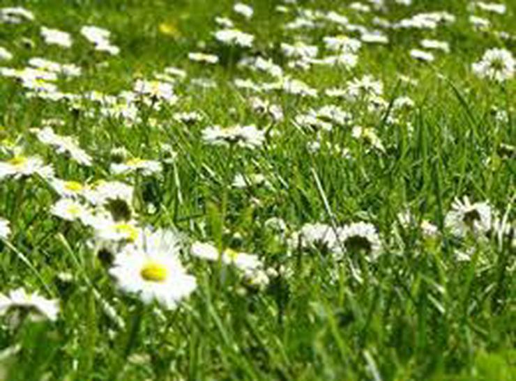 Rasen mähen Unkraut zupfen Gartenarbeiten