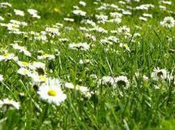 Rasen m�hen Unkraut zupfen Gartenarbeiten - Reparaturen & Handwerker - Bild 1