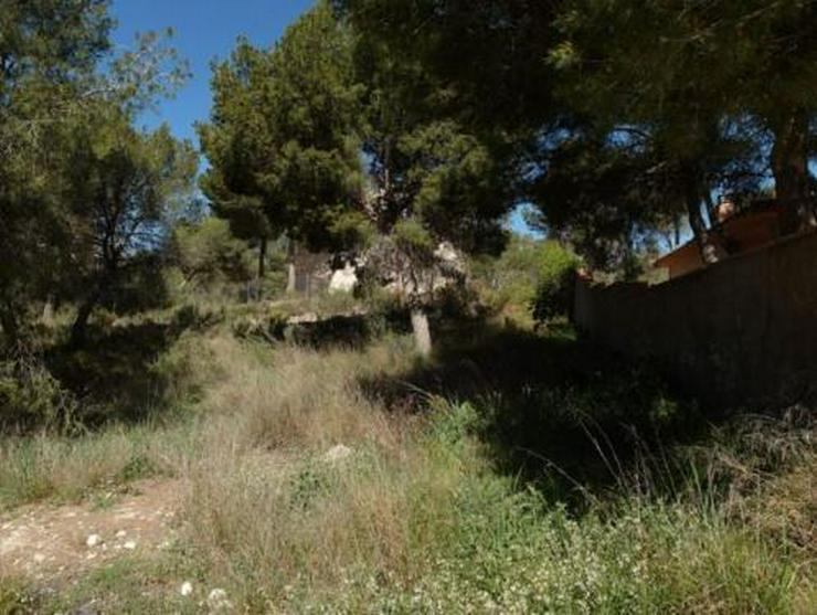 Bild 4: Baugrundstück mit schönem Ausblick bei Tibi