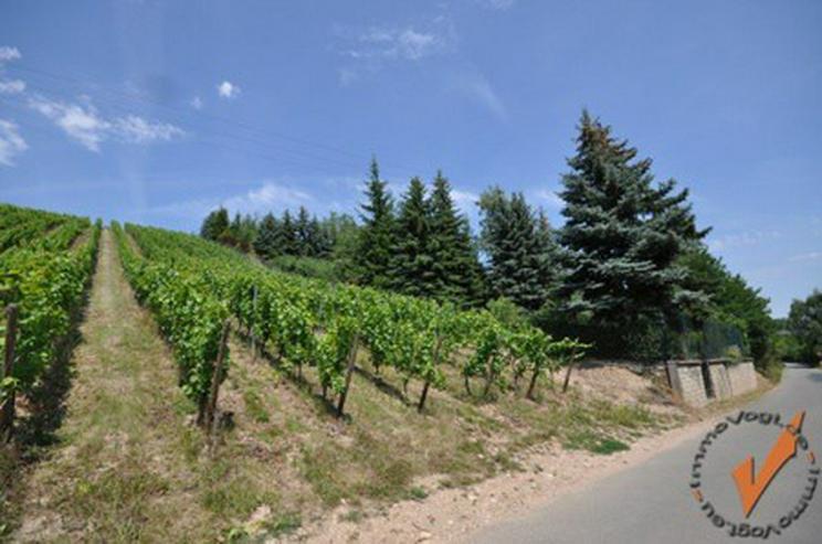 Bild 3: PUR Natur! Rechts der Golfclub Nahetal, links der Blick zur Ebernburg!
