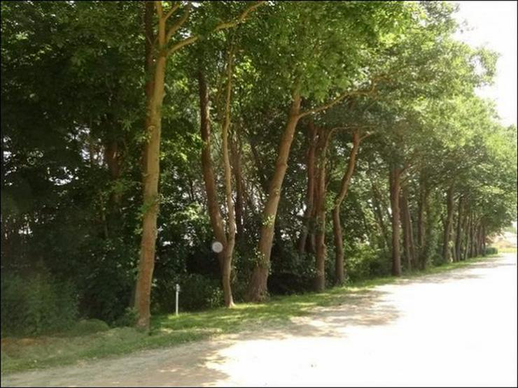 Bild 6: Bauland auf 2900 m² im Ostseebad in Zinnowitz für Wohnen und Gewerbe