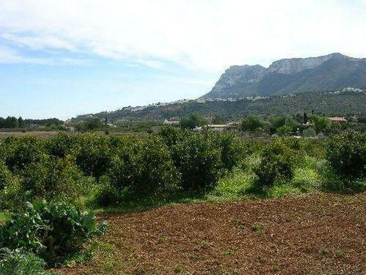 Bild 5: Grundstück mit Ruine in ruhiger Lage
