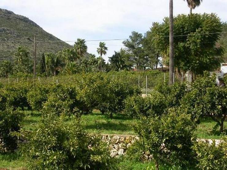 Bild 5: Grundstück am Rande der Ortschaft Beniarbeig