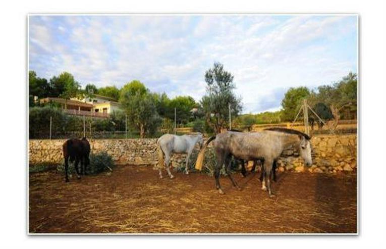 Bild 6: Stilvolles Landhaus mit Pferdezucht