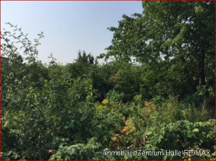 Tolles Einfamilienhaus in idylischer Lage zwischen Köthen und Halle !!! - Haus kaufen - Bild 5