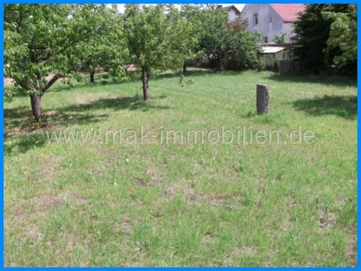 MAK Immobilien empfiehlt: Provisionsfrei!!!- nähe Werder/Havel. Bezahlbares Grundstück u... - Grundstück kaufen - Bild 1