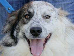 Wundersch�ner Ronny 2 J kinderlieb - Mischlingshunde - Bild 1