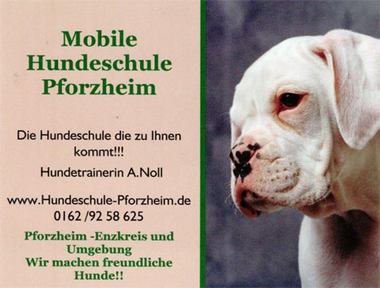 Mobile Hundeschule Pforzheim A.Noll