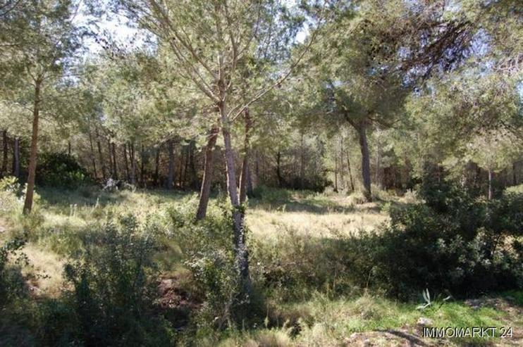 Bild 2: Schönes Grundstück in Adsubia