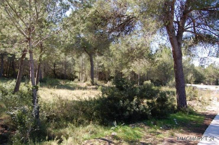 Bild 3: Schönes Grundstück in Adsubia