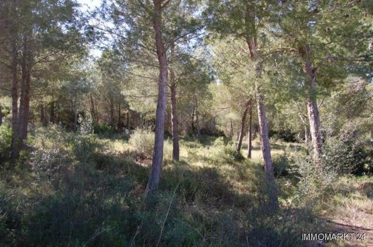 Bild 4: Schönes Grundstück in Adsubia