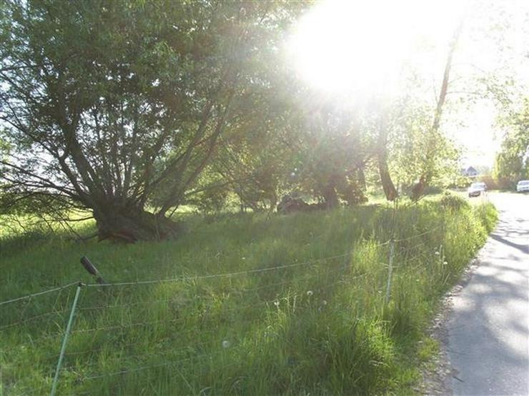 Bild 5: Selten aber wahr - Ufergrundstück auf Usedom am Achterwasser!