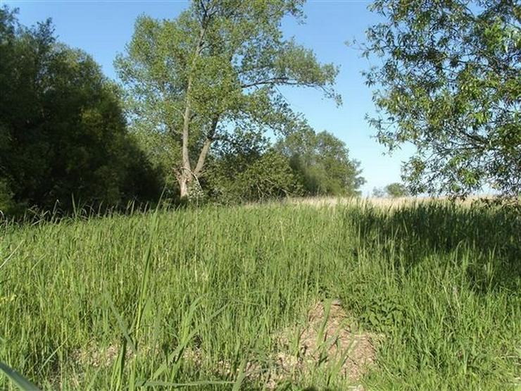 Bild 8: Selten aber wahr - Ufergrundstück auf Usedom am Achterwasser!