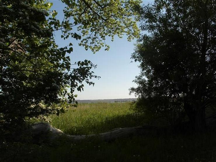 Bild 7: Selten aber wahr - Ufergrundstück auf Usedom am Achterwasser!