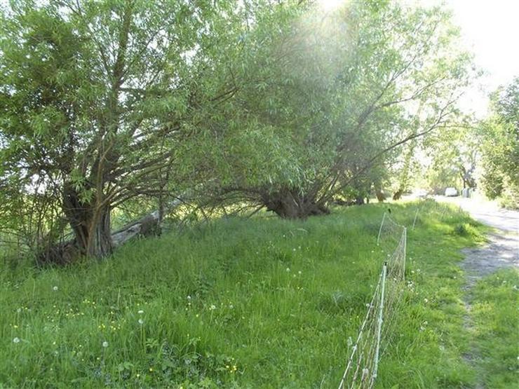Bild 10: Selten aber wahr - Ufergrundstück auf Usedom am Achterwasser!