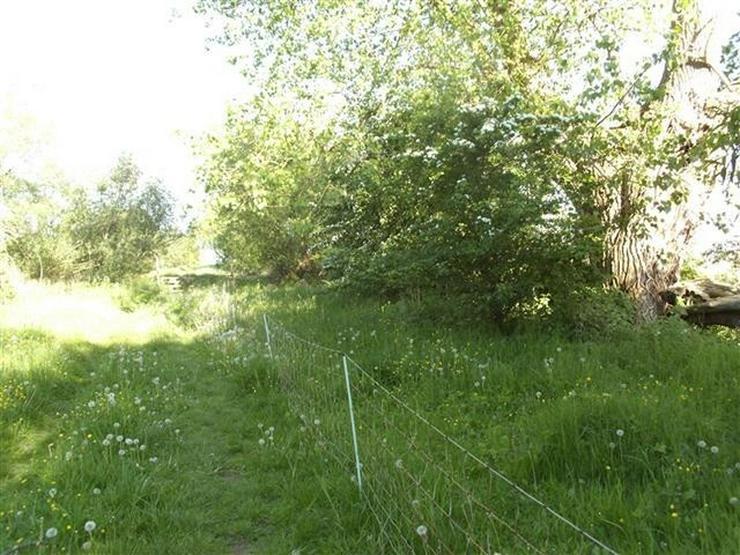 Bild 9: Selten aber wahr - Ufergrundstück auf Usedom am Achterwasser!