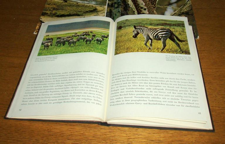 Bild 2: Zoo Afrika