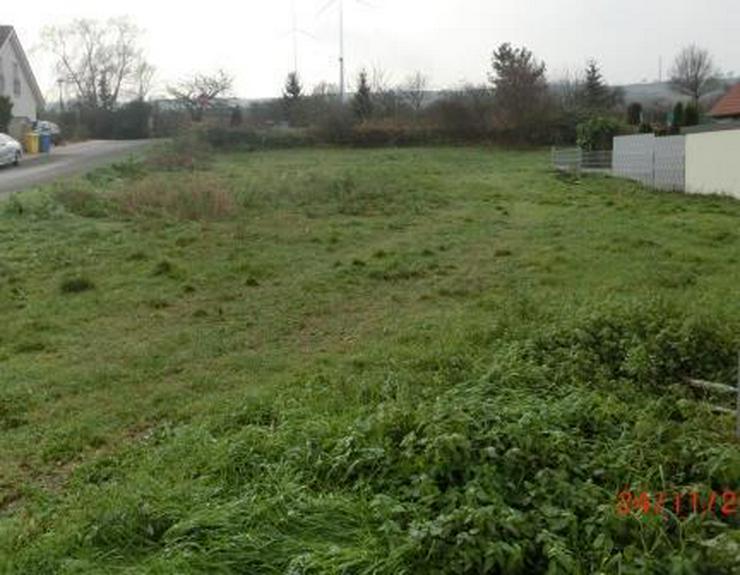 Bild 3: 849 m² bebaubares Grundstück in 67591 Wachenheim