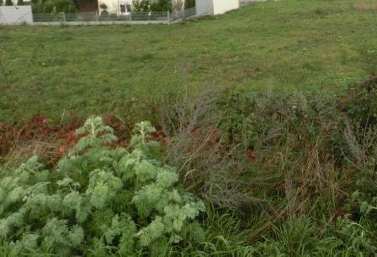 849 m² bebaubares Grundstück in 67591 Wachenheim - Grundstück kaufen - Bild 1