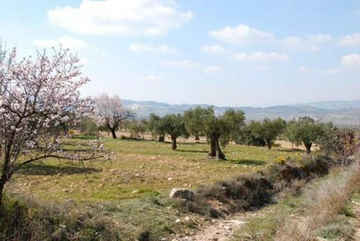 Bild 2: Grundstück in wunderschöner Umgebung bei Biar
