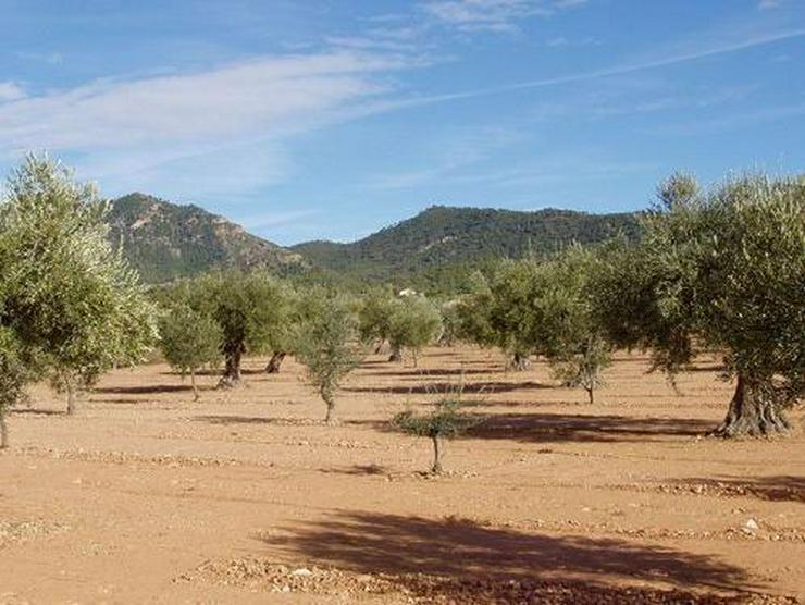 Grundstück in wunderschöner Umgebung bei Biar - Grundstück kaufen - Bild 1