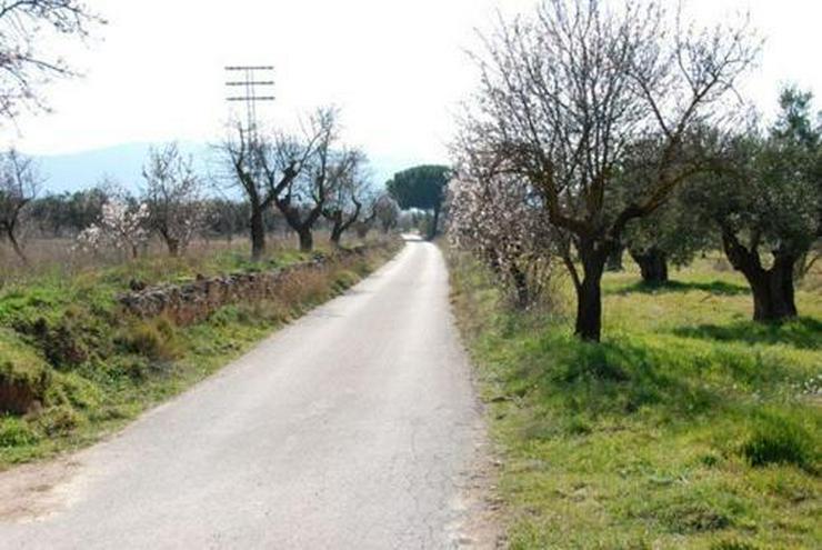 Bild 5: Grundstück in wunderschöner Umgebung bei Biar