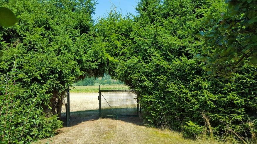 Bild 2: Schmuckstück im Grünen - Besonderes Gartengrundstück mit Hütte und Brunnen in Warmbron...