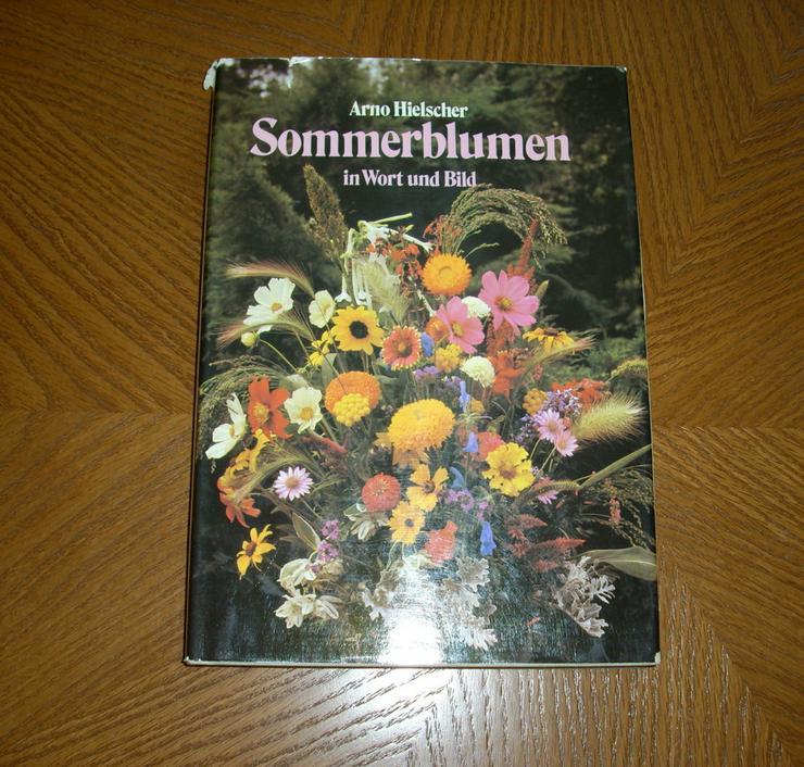 Sommerblumen - Garten, Heimwerken & Wohnen - Bild 1