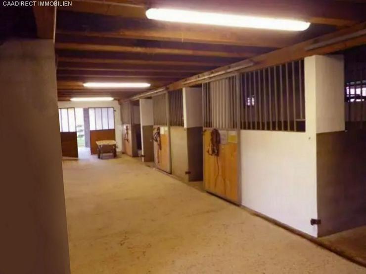Bild 3: Reitanlage mit Wohn- & Geschäftshaus im Elsass - 10 Min v/Deutschland - 30 Min v/Basel