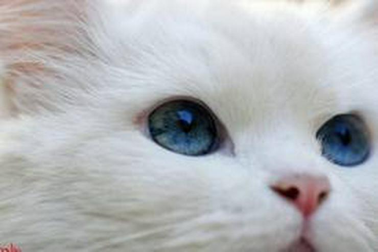 Catsitting at home,Katzenbetreuung, Tiersitter - Tierbetreuung - Bild 1