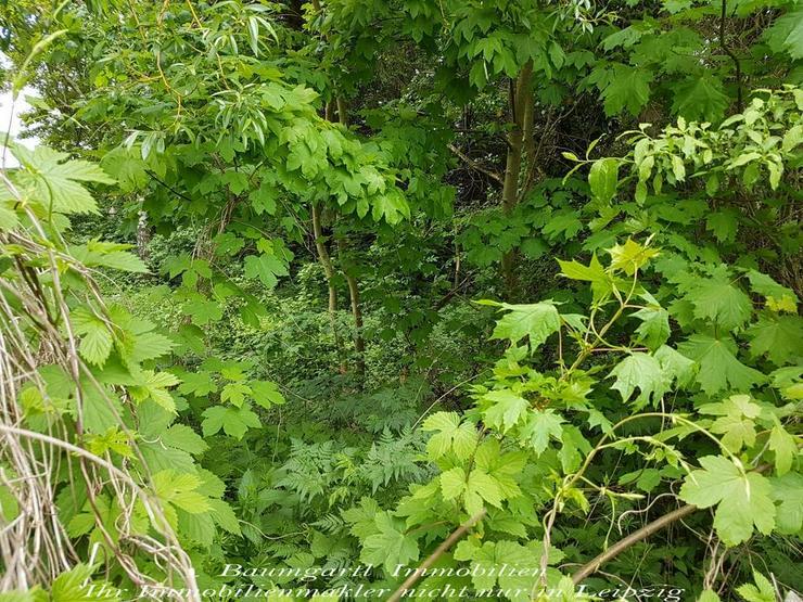 Bild 3: GRUNDSTÜCK im idyllischen Südharz umgeben von Wäldern und ruhiger Lage