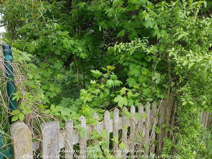 GRUNDSTÜCK im idyllischen Südharz umgeben von Wäldern und ruhiger Lage - Grundstück kaufen - Bild 1