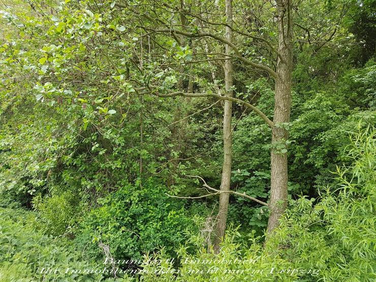 Bild 2: GRUNDSTÜCK im idyllischen Südharz umgeben von Wäldern und ruhiger Lage