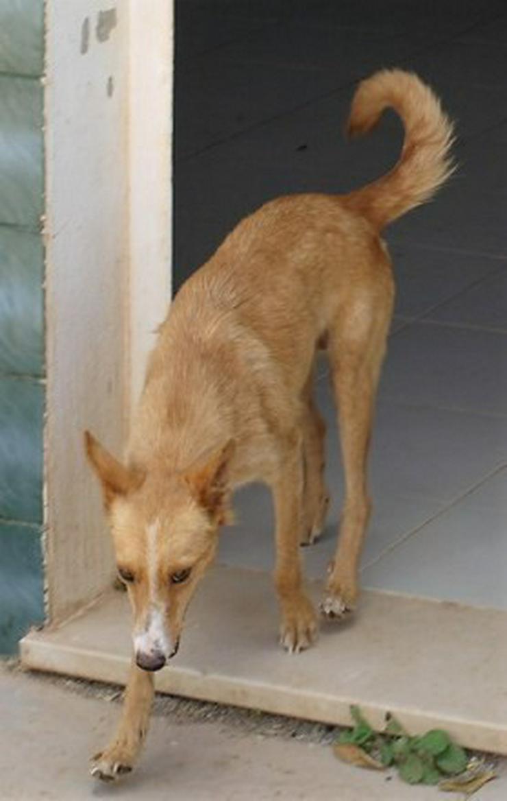 Bild 2: Nathalie, Tierschutzhund aus Spanien